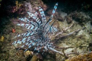 Diving in Tayrona National Park - image Colombia-Tayrona-Taganga-diving-6-300x200 on https://oceanoscuba.com.co