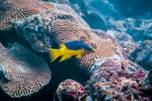 Diving in Tayrona National Park - image Colombia-Tayrona-Taganga-diving-8-1-300x200 on https://oceanoscuba.com.co